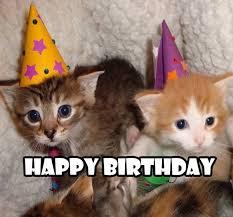 Cat Meme Pictures - best happy birthday cat meme