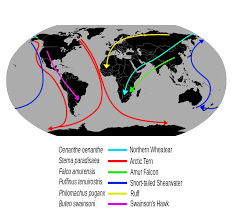 bird migration wikipedia