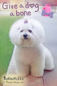 bichon frise fluffy keeping up appearances 6 easy tips for awesome bichon frise