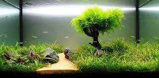 freshwater planted aquarium fragments of memories 残碎的记忆