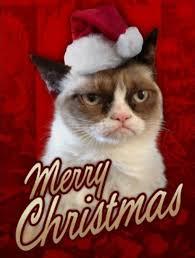 Christmas Grumpy Cat Meme - grumpy cat merry christmas festival collections