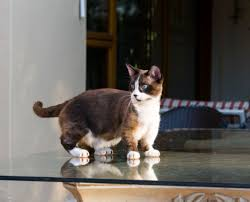 Barn Cat Names Domestic Cat Vs Mixed Breed Cat What Is The Difference
