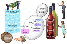 cartoon wine png beverages free full text conducting wine symphonics with the