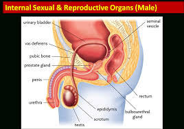 Anatomy Of Reproductive System Female Role Of Male Reproductive System Female Reproductive Part Real Pic