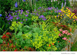picture of country cottage garden blooms