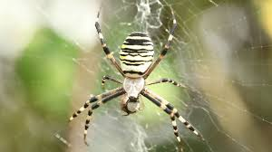 macro close up on spider eating prey scary black and yellow