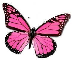 butterfly symbolism butterfly symbol meaning websites to visit