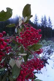 native american medicinal plants 54 best medicinal plants images on pinterest medicinal plants