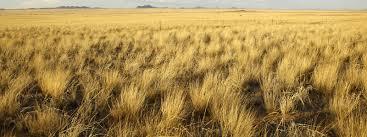 grassland native plants grasslands habitats wwf