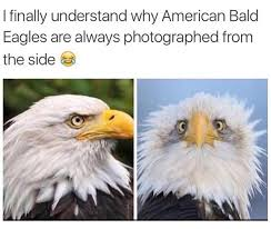 America Eagle Meme - not the same eagle in other photo i can relate pinterest