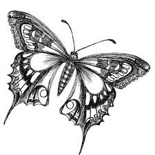 butterfly drawings black and white butterfly drawing image