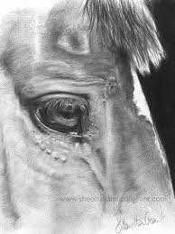 how to render a horses eye in pencil snapguide