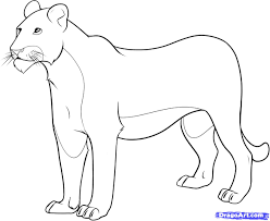 how to draw a lioness step by step safari animals animals free