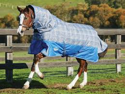 Outdoor Rugs For Horses Why Rug Your Weatherbeeta Australia