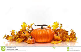 fall pumpkin wallpaper pumpkins and autumn leaves on a white background stock image