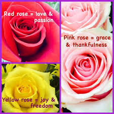 lafayette florist color meanings lafayette florist greenhouses in lafayette