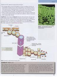 9 1 9 2 transport in plants john osborne u0027s teaching u0026 learning