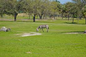 busch gardens family vacation packages why we love busch gardens u0027 serengeti safari experience