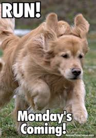 Golden Retriever Meme - funny meme and quotes golden retriever dogs and puppies for dog