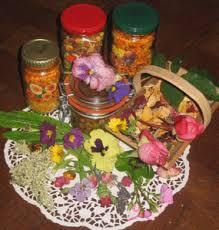 les fleurs comestibles en cuisine fleurs comestibles au jardin 2 floradiane jardin cuisine beauté