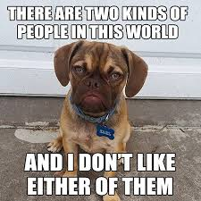 Dodg Meme - the 10 best memes of grumpy dog this dog s life dog community