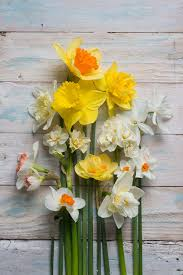 Cut Flower Garden by Flower Power Inside Garden Design Magazine Subscription Discount