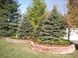 raised landscape bed large colorado blue spruce tree stone