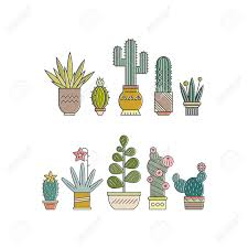 flat colorful illustration of succulent plants and cactuses in