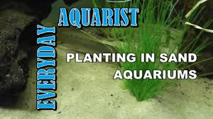 how to plant in sand aquariums youtube