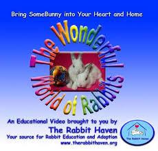 world of rabbit the wonderful world of rabbits dvd the rabbit