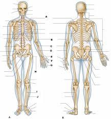 anatomy and physiology i test iii proprofs quiz
