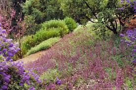 native plant gardening the beauty of natives photobotanic