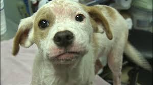 9 investigates breeders still selling sick puppies online wsoc tv