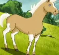 mesa horseland wiki fandom powered wikia
