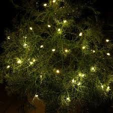 automatic outdoor christmas lights 40 best christmas lights and candles images on pinterest christmas
