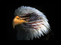 Eagle American Flag Flag Eagle