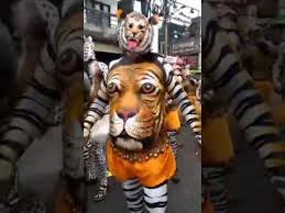 tiger in stomach