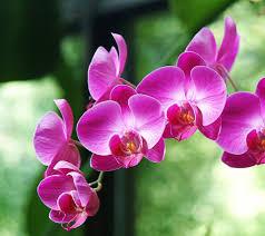 orchid flower orchid flower weneedfun