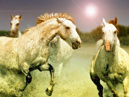 3d wallpaper for computer free horse wallpaper for computer 42 horse photos and pictures