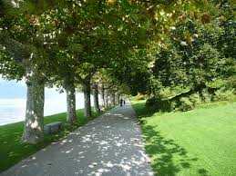 Types Of Garden Trees Mary Mary Quite Contrary U2026what Type Of Garden Is Your Business