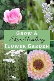 Flower Garden Ideas Beginners by Grow A Skin Healing Flower Garden Gardens Natural Garden And
