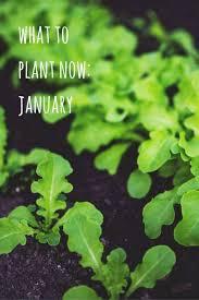 Winter Garden Jobs - 31 best winter gardening images on pinterest winter garden