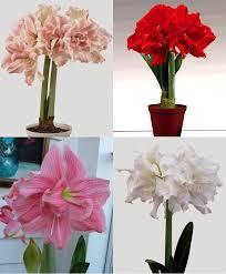 flower bulbs decor