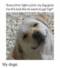 High Dog Meme - every time l light a joint my dog gives me this look like he wants