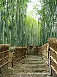 119 best bamboo grasses images on garden plants