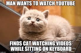 Keyboard Cat Meme - th id oip 90wctdh7wsxp5ev wwdqhghae8