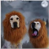 Dog Halloween Costume Lion Mane Wholesale Lion Mane Dog Costume Buy Cheap Lion Mane Dog Costume
