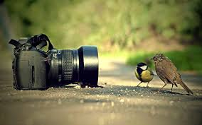 Best Photography Best Photography Images