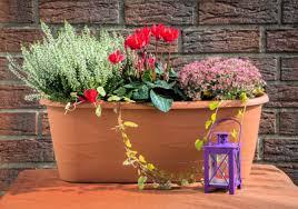 herbstbepflanzung balkon blumen de herbstbepflanzung für balkon und terrasse