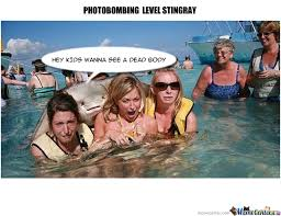 Stingray Meme - photo bombing stingray by kgenius12 meme center